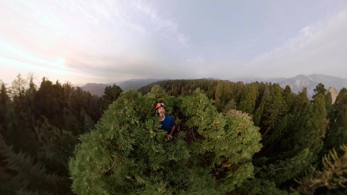 Large_sequoias_a_16x9