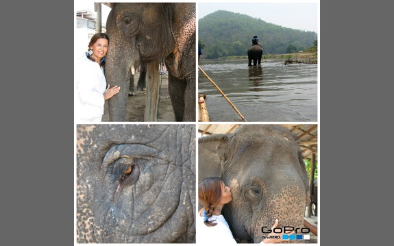 Main_elephant_gopro_collage