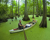 Pod_thumb_green_canoe-1